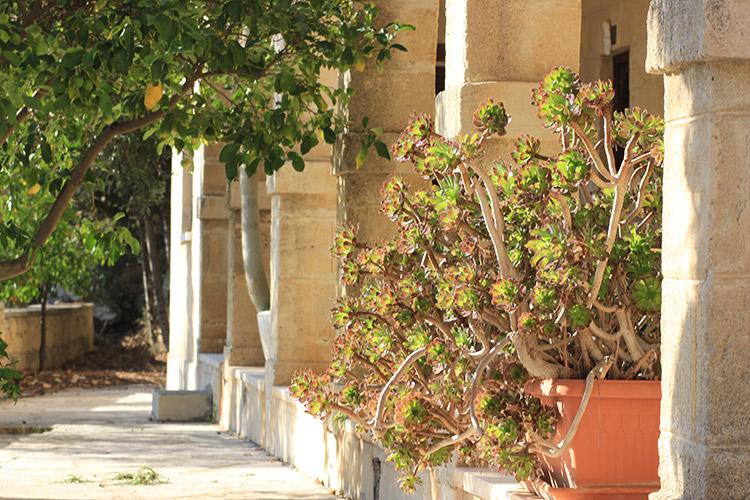Agios Neophytos Monastery, Tala