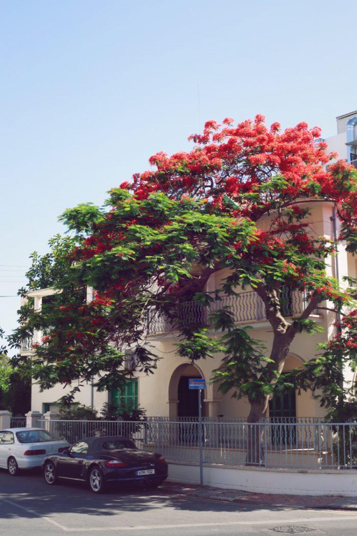 Weekend in Larnaca