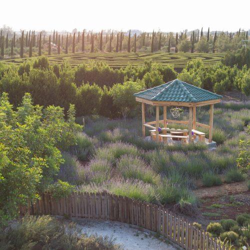 lavender festival, cyherbia botanical park