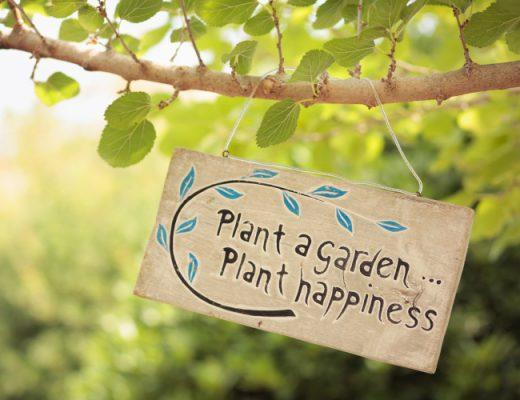 heaven on earth herb garden, Polis Cyprus