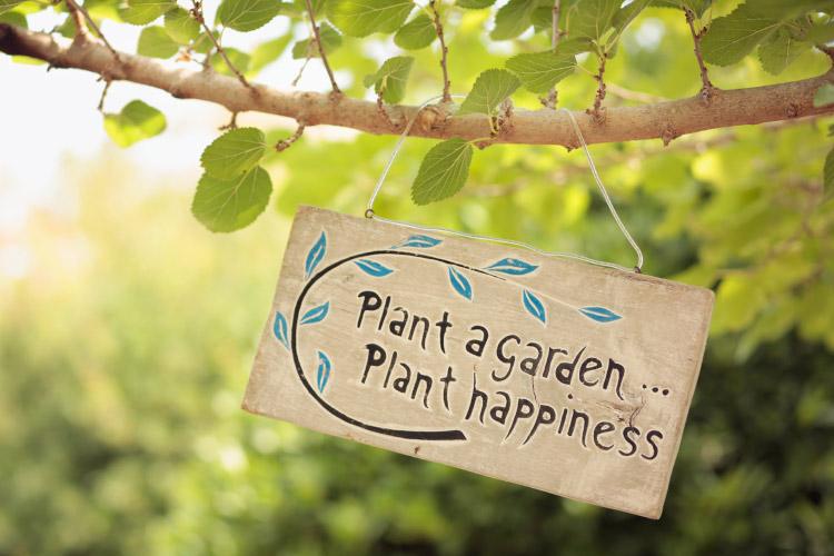 Heaven on Earth Herb Garden