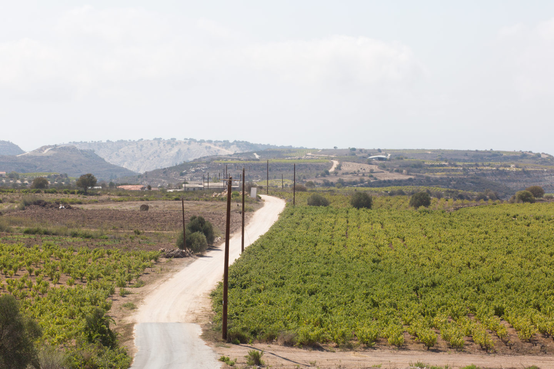 vasilikon winery cyprus