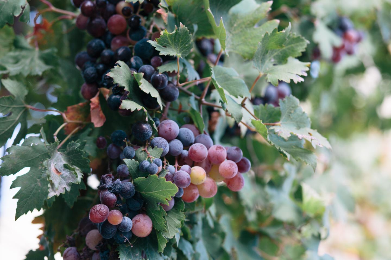 douloufakis-winery-crete-22