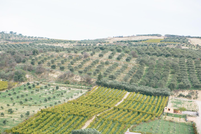 douloufakis-winery-crete-23