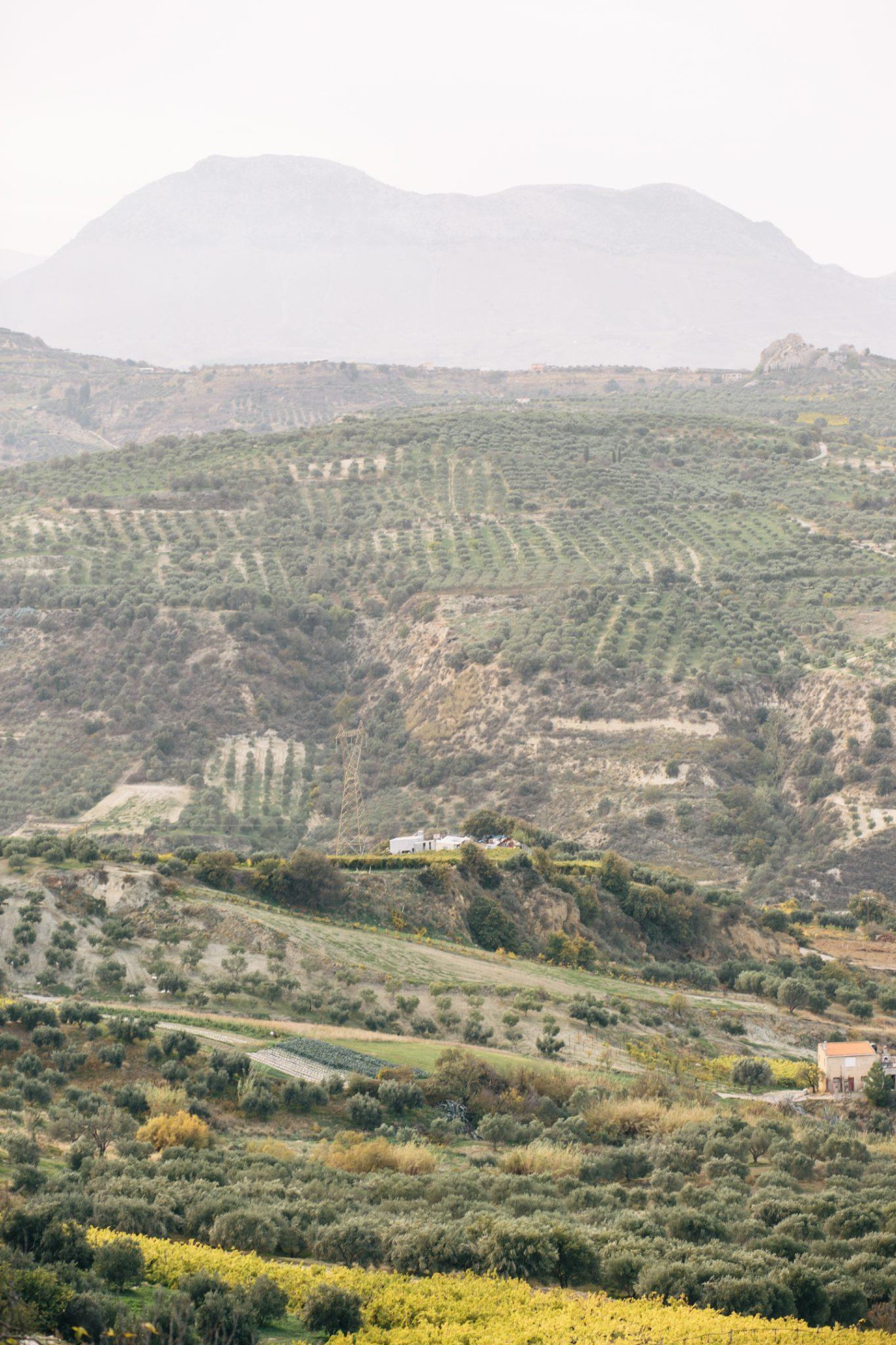 douloufakis-winery-crete-28