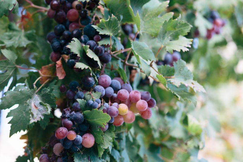 Douloufakis Winery, Crete