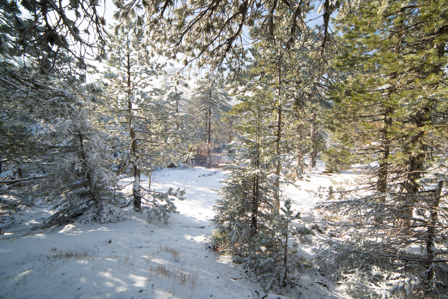 first-snow-troodos-cyprus-22