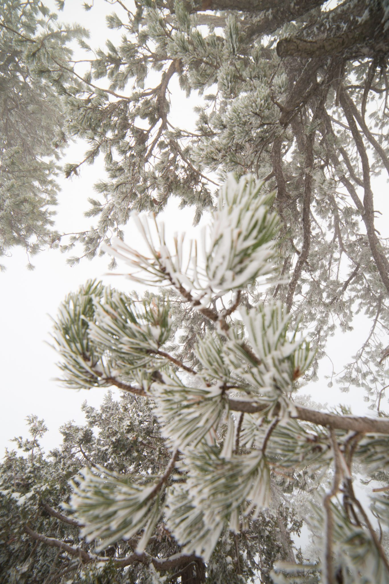 first-snow-troodos-cyprus-32