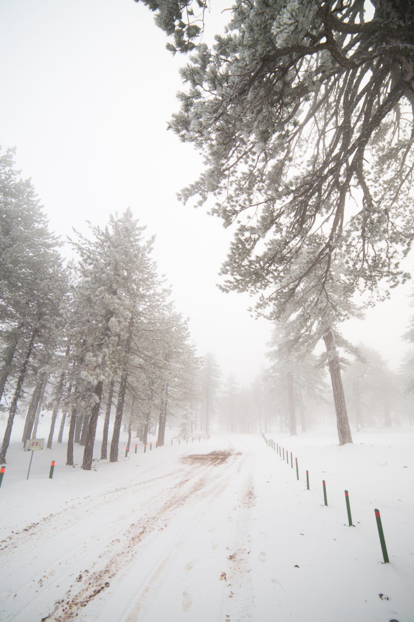 first-snow-troodos-cyprus-35