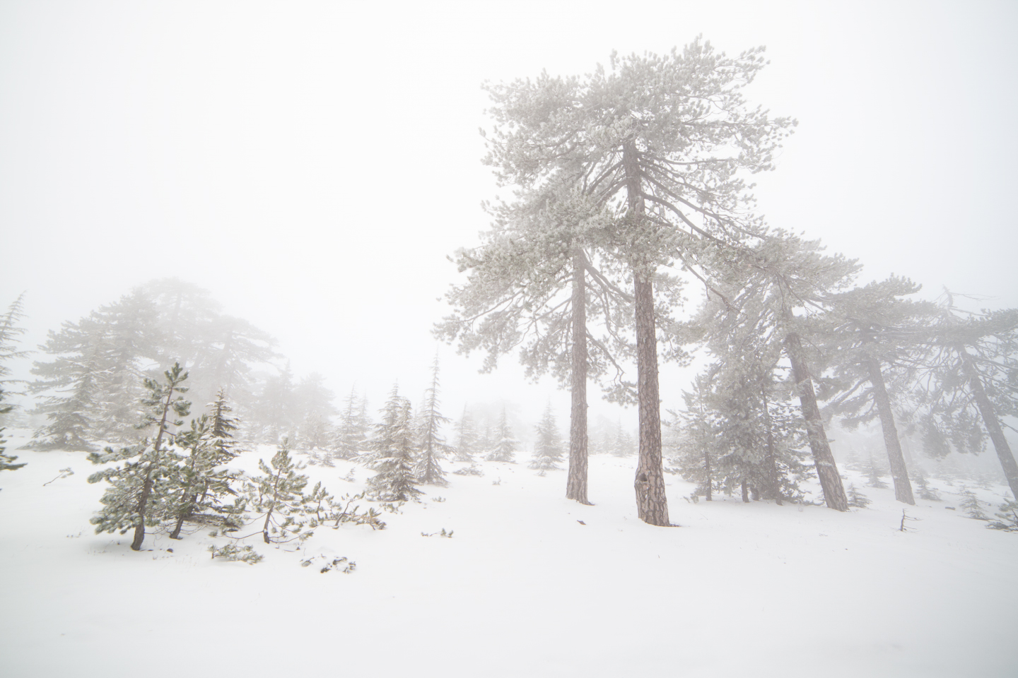 first-snow-troodos-cyprus-39