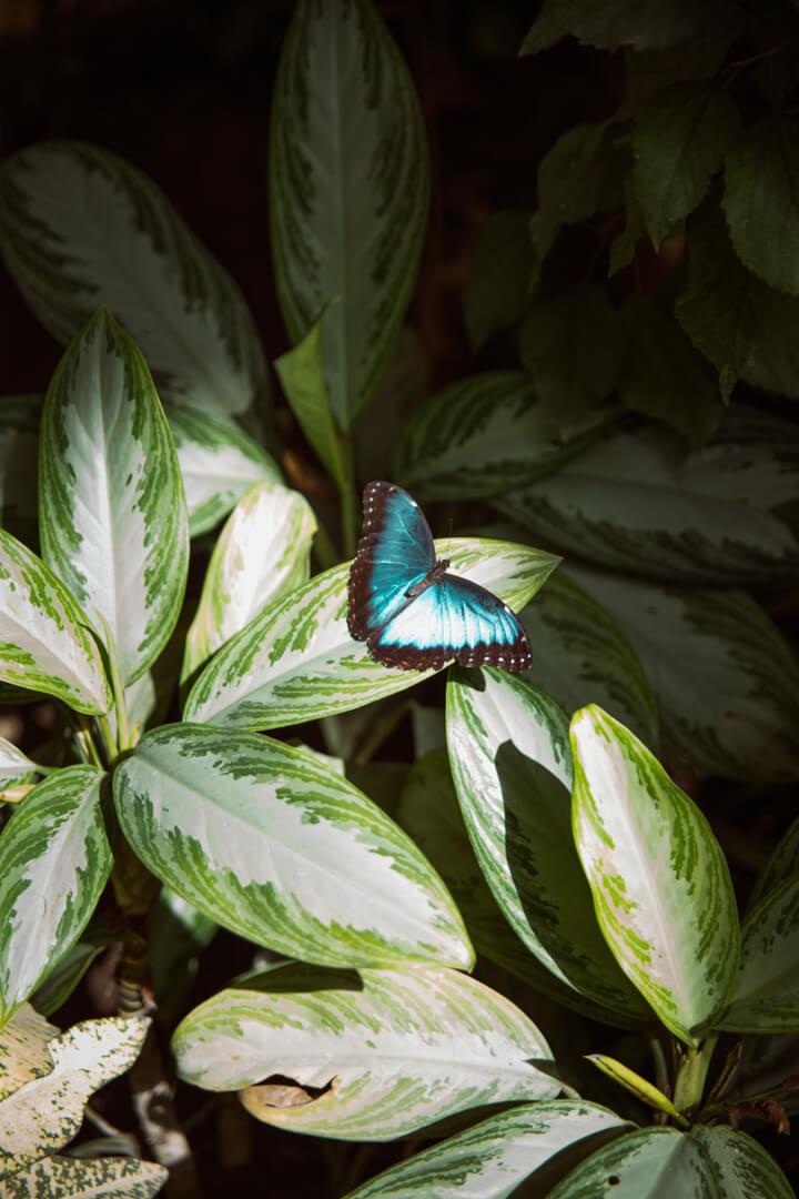 Mariposario de Benalmadena (Butterfly Park)