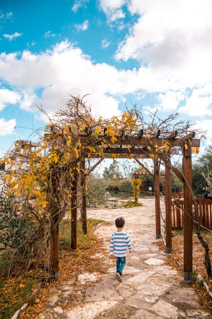 Oleastro Olive Oil Park & Museum, Anogyra (Cyprus)