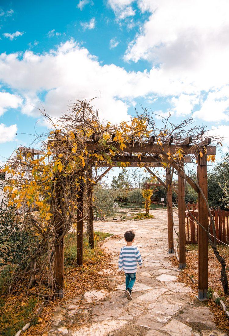 Oleastro Olive Oil Park & Museum, Anogyra